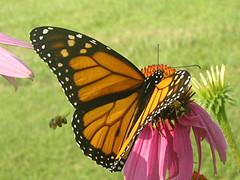 Beautiful Butterfly Kolam Patterns